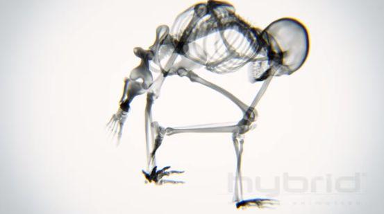 Esqueleto fazendo ioga