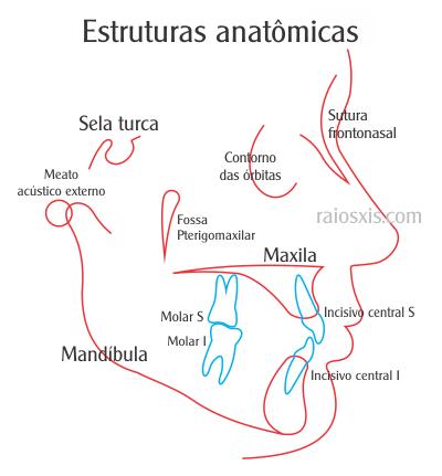 Cefalometria: anatomia