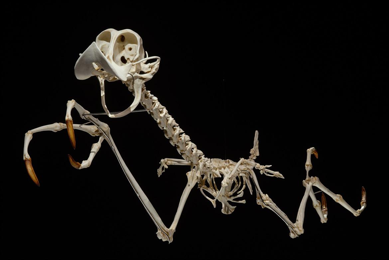 Esqueleto Papaléguas