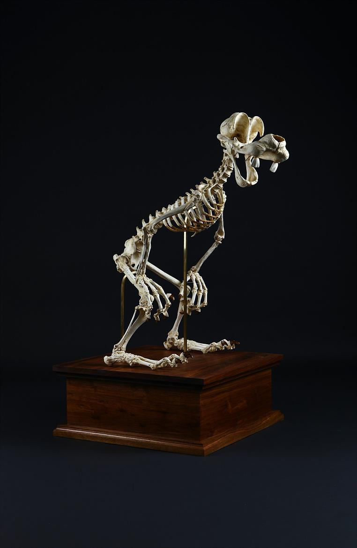 Esqueleto Pateta