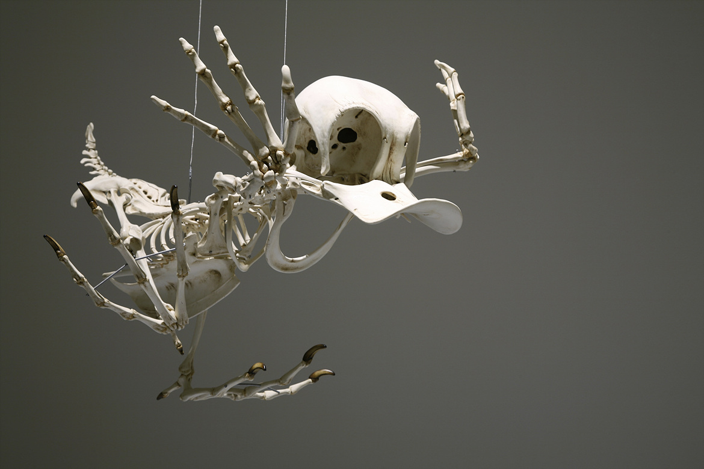 Esqueleto Pato Donald