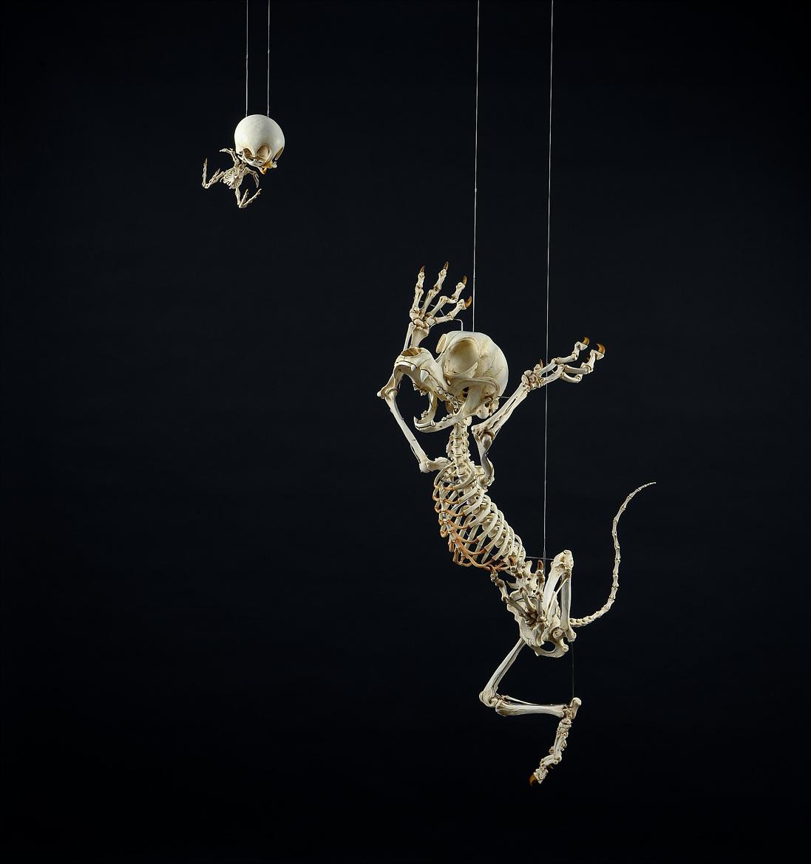 Esqueleto Piu Piu & Frajola