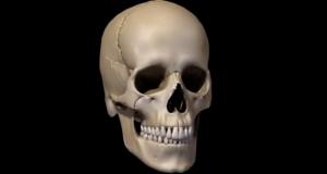 Ossos do crânio e da face