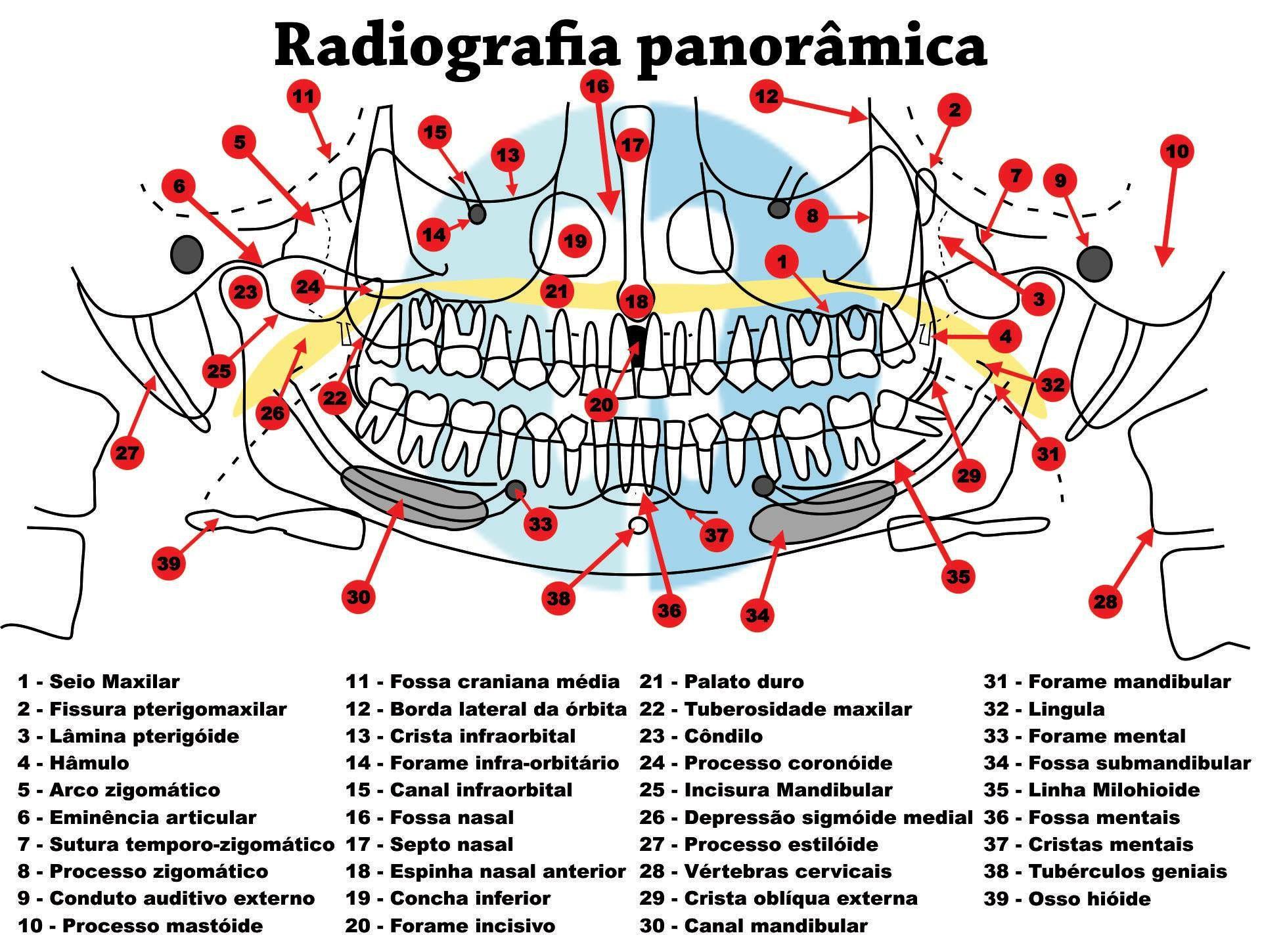 Anatomia em radiografia panorâmica
